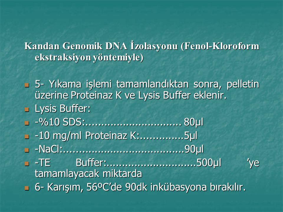 Kandan Genomik DNA İzolasyonu (Fenol-Kloroform ekstraksiyon yöntemiyle)