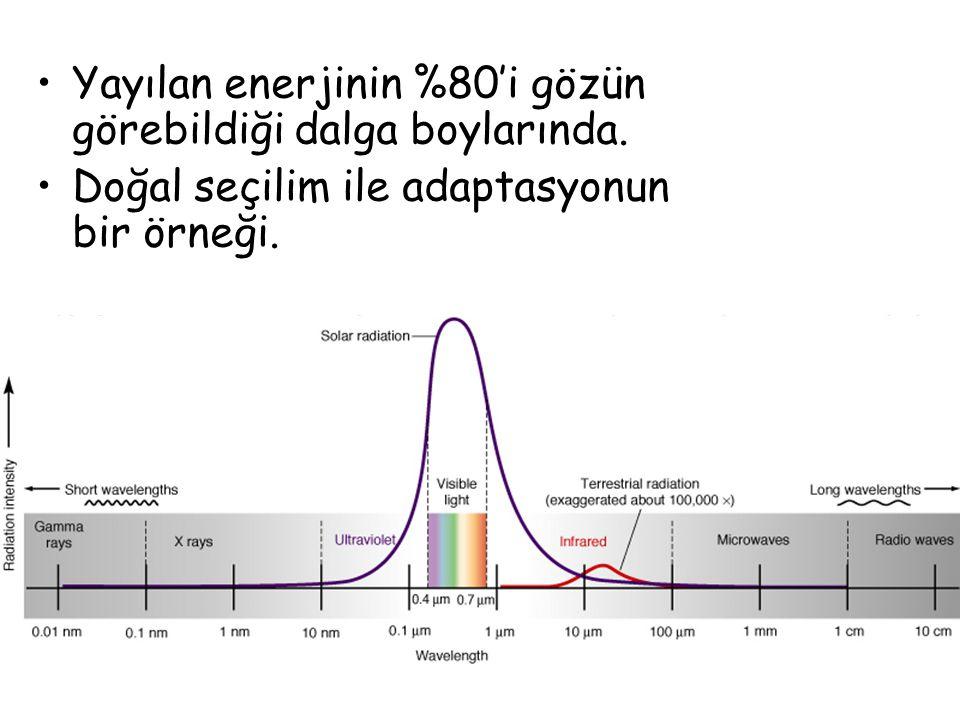 Yayılan enerjinin %80'i gözün görebildiği dalga boylarında.