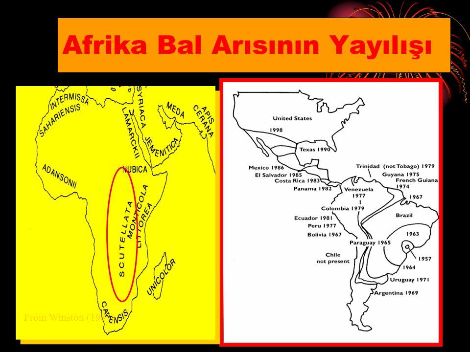 Afrika Bal Arısının Yayılışı