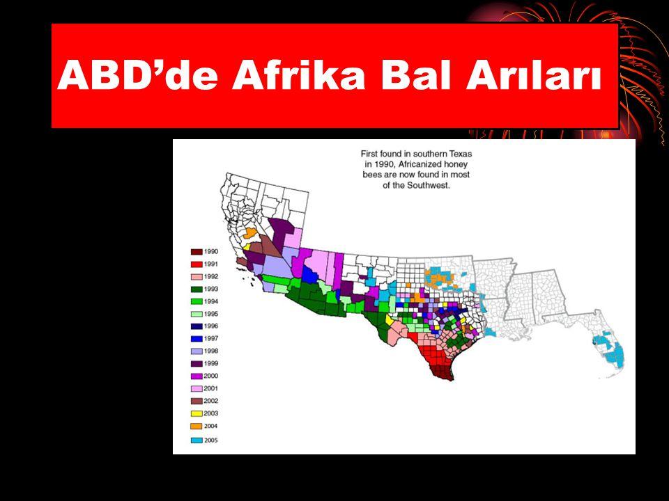ABD'de Afrika Bal Arıları