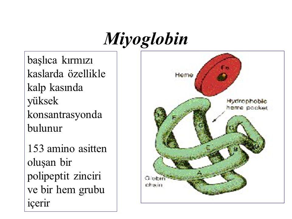 Miyoglobin başlıca kırmızı kaslarda özellikle kalp kasında yüksek konsantrasyonda bulunur.