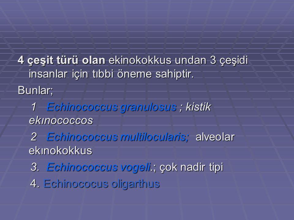 4 çeşit türü olan ekinokokkus undan 3 çeşidi insanlar için tıbbi öneme sahiptir.