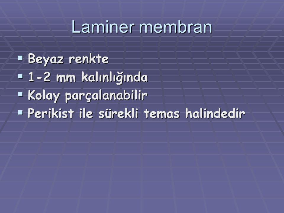 Laminer membran Beyaz renkte 1-2 mm kalınlığında Kolay parçalanabilir