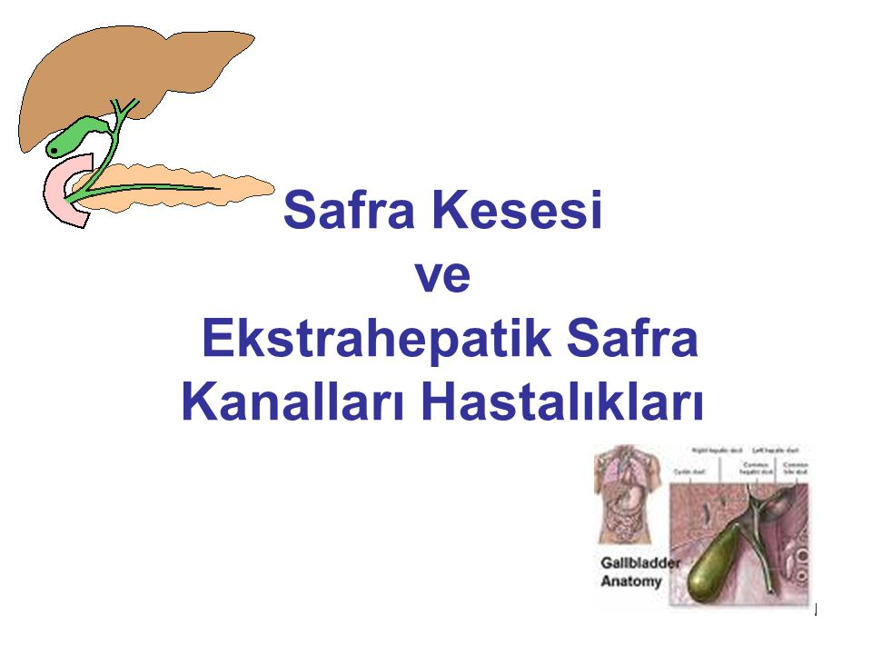 Safra Kesesi ve Ekstrahepatik Safra Kanalları Hastalıkları