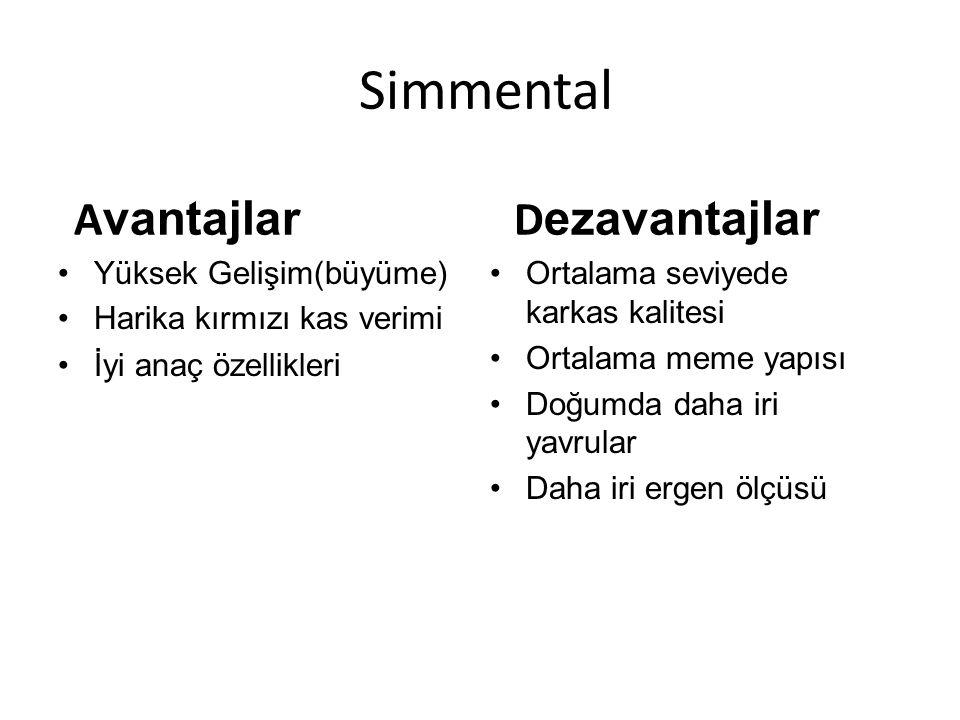 Simmental Avantajlar Dezavantajlar Yüksek Gelişim(büyüme)