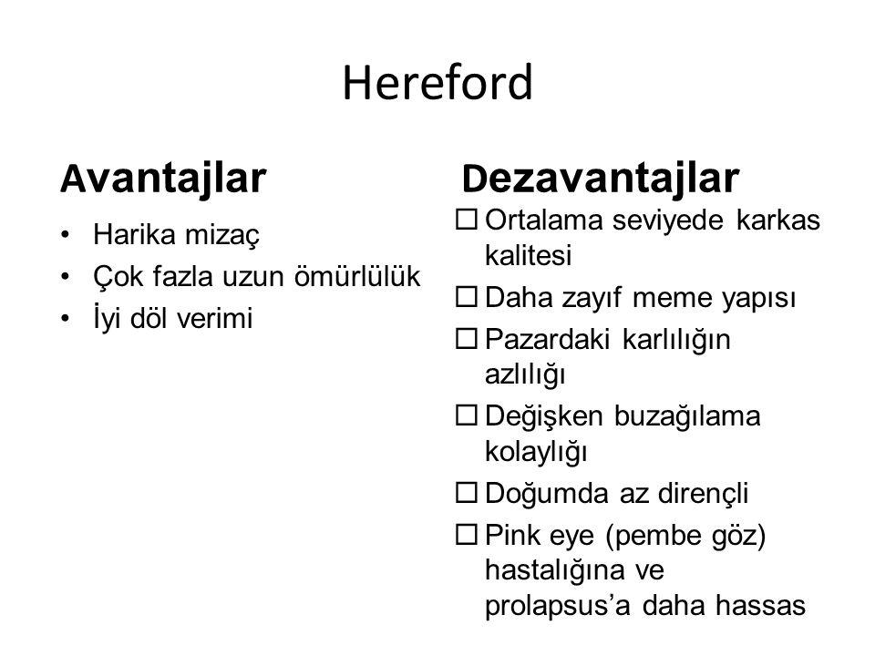 Hereford Avantajlar Dezavantajlar Ortalama seviyede karkas kalitesi