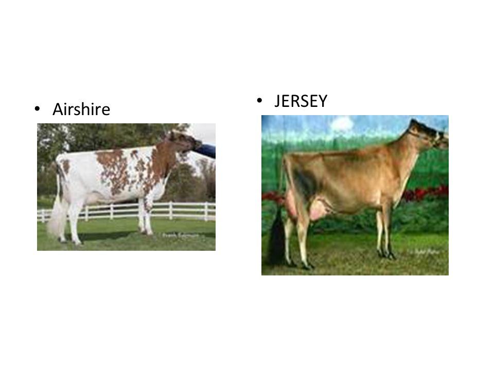 JERSEY Airshire