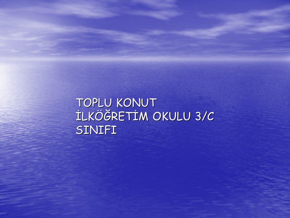 TOPLU KONUT İLKÖĞRETİM OKULU 3/C SINIFI