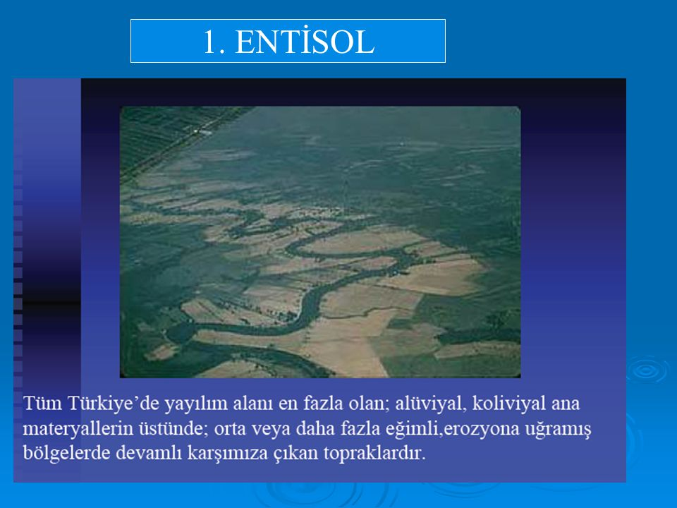 1. ENTİSOL