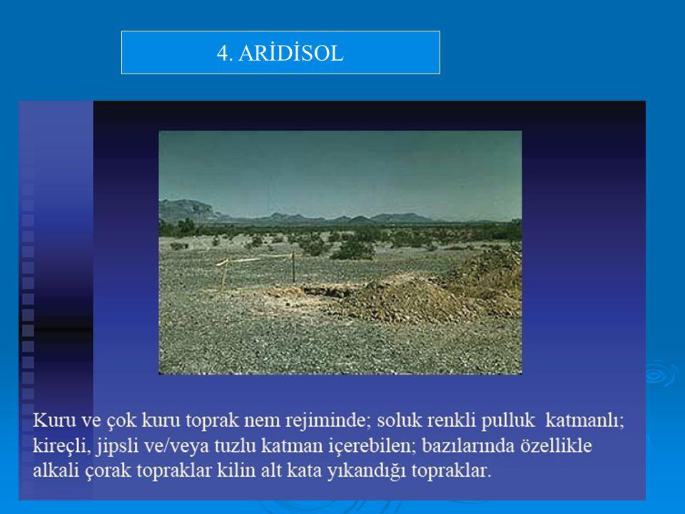4. ARİDİSOL