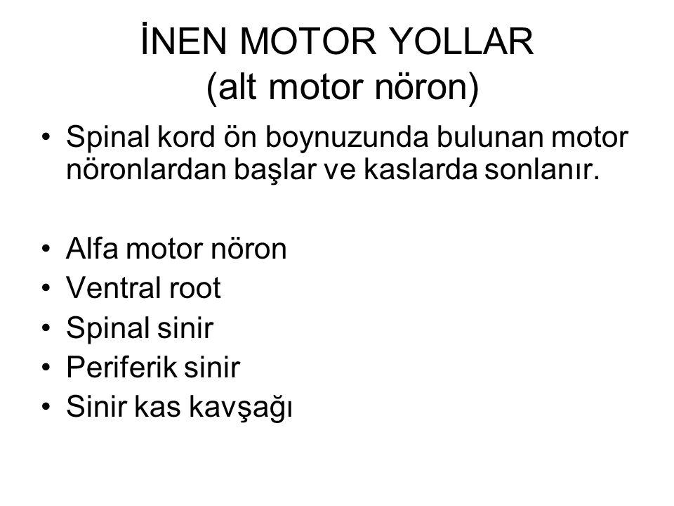 İNEN MOTOR YOLLAR (alt motor nöron)