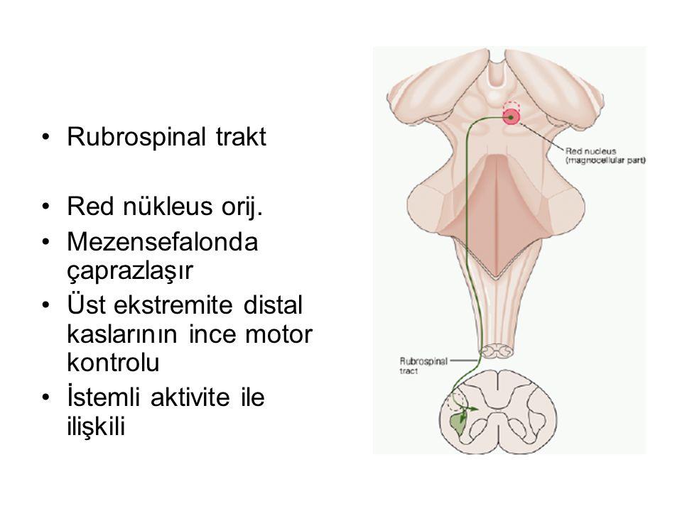 Rubrospinal trakt Red nükleus orij. Mezensefalonda çaprazlaşır. Üst ekstremite distal kaslarının ince motor kontrolu.