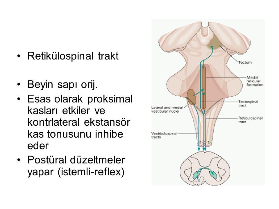 Retikülospinal trakt Beyin sapı orij. Esas olarak proksimal kasları etkiler ve kontrlateral ekstansör kas tonusunu inhibe eder.