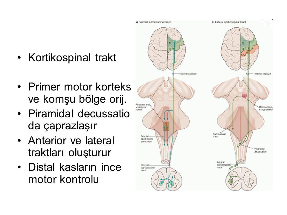 Kortikospinal trakt Primer motor korteks ve komşu bölge orij. Piramidal decussatio da çaprazlaşır.
