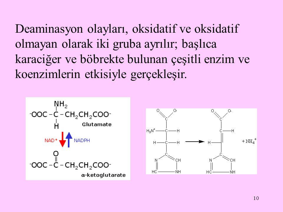 Deaminasyon olayları, oksidatif ve oksidatif olmayan olarak iki gruba ayrılır; başlıca karaciğer ve böbrekte bulunan çeşitli enzim ve koenzimlerin etkisiyle gerçekleşir.
