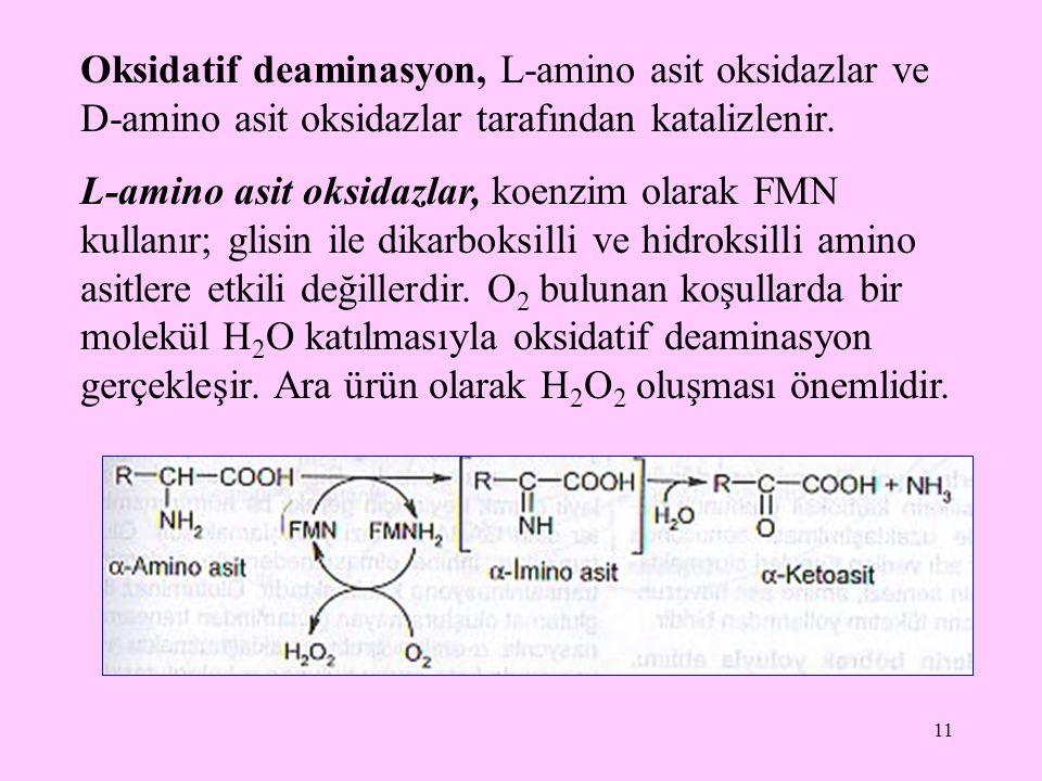 Oksidatif deaminasyon, L-amino asit oksidazlar ve D-amino asit oksidazlar tarafından katalizlenir.
