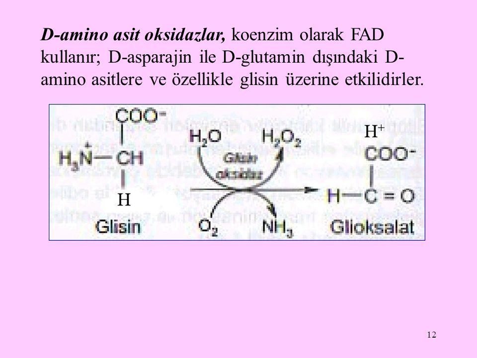 D-amino asit oksidazlar, koenzim olarak FAD kullanır; D-asparajin ile D-glutamin dışındaki D-amino asitlere ve özellikle glisin üzerine etkilidirler.