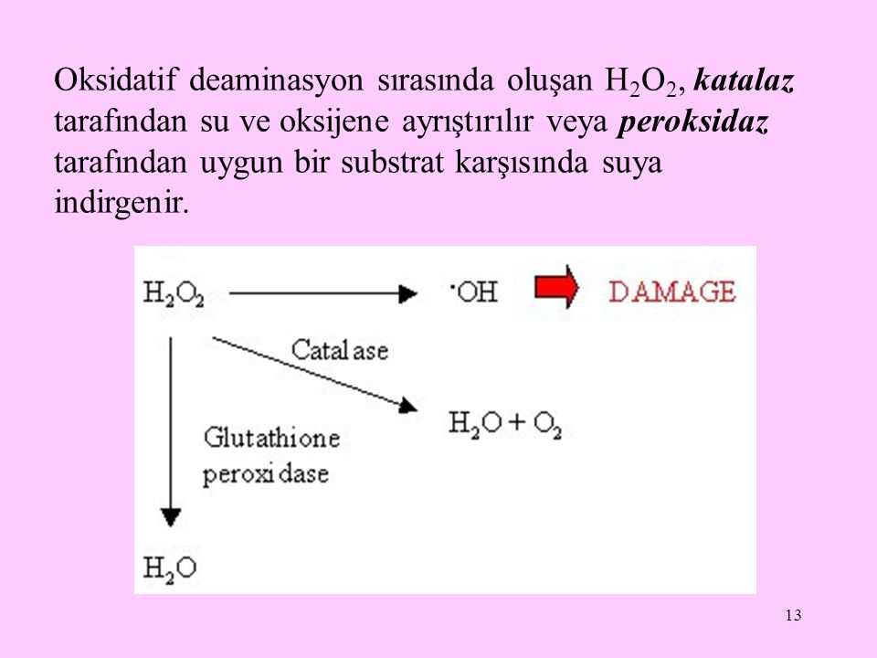 Oksidatif deaminasyon sırasında oluşan H2O2, katalaz tarafından su ve oksijene ayrıştırılır veya peroksidaz tarafından uygun bir substrat karşısında suya indirgenir.