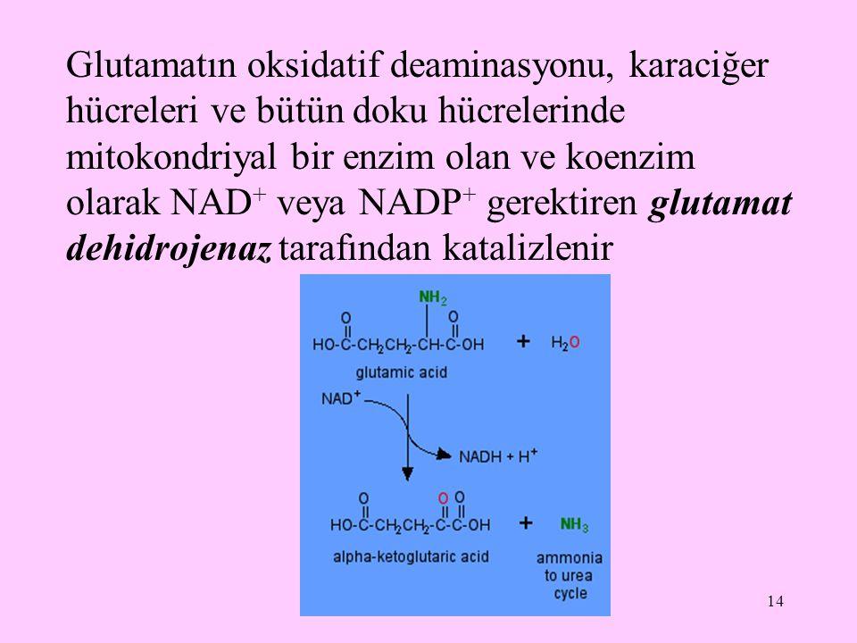 Glutamatın oksidatif deaminasyonu, karaciğer hücreleri ve bütün doku hücrelerinde mitokondriyal bir enzim olan ve koenzim olarak NAD+ veya NADP+ gerektiren glutamat dehidrojenaz tarafından katalizlenir