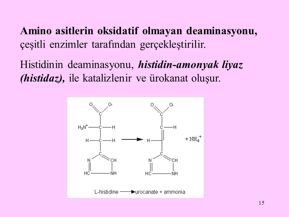 Amino asitlerin oksidatif olmayan deaminasyonu, çeşitli enzimler tarafından gerçekleştirilir.