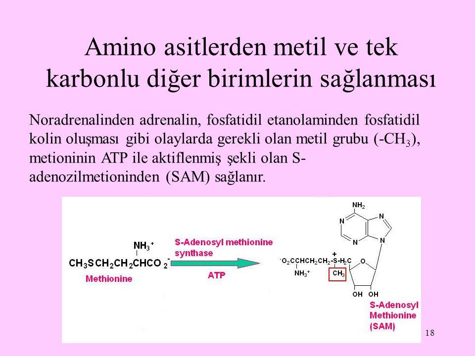 Amino asitlerden metil ve tek karbonlu diğer birimlerin sağlanması
