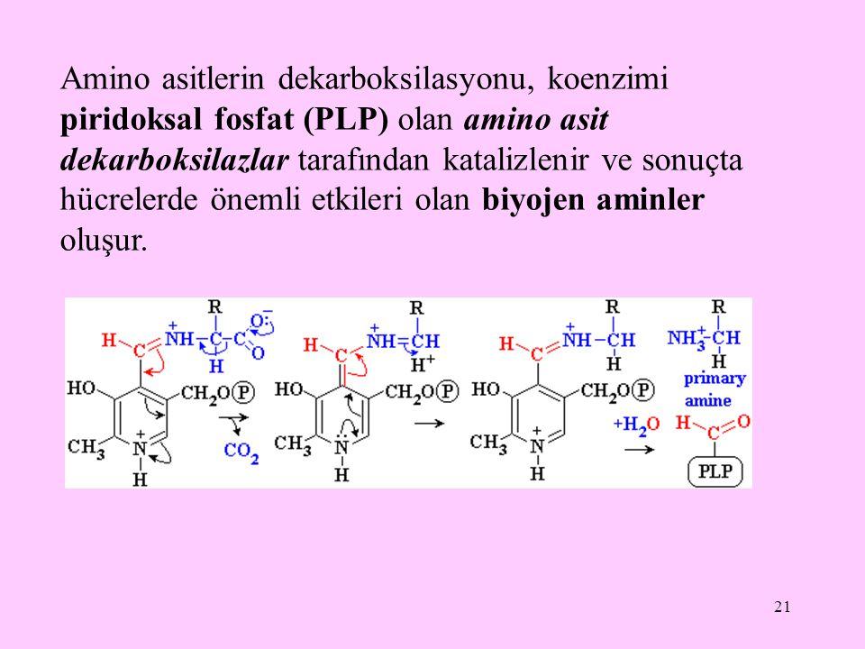 Amino asitlerin dekarboksilasyonu, koenzimi piridoksal fosfat (PLP) olan amino asit dekarboksilazlar tarafından katalizlenir ve sonuçta hücrelerde önemli etkileri olan biyojen aminler oluşur.