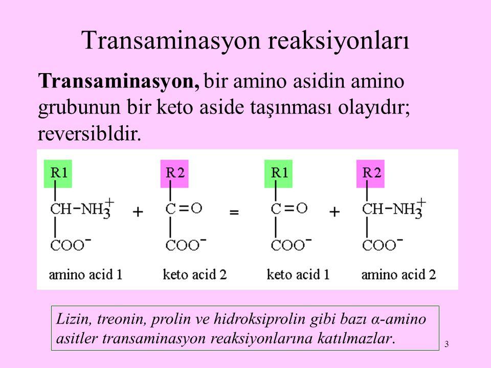 Transaminasyon reaksiyonları