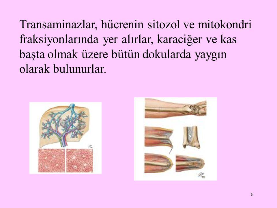 Transaminazlar, hücrenin sitozol ve mitokondri fraksiyonlarında yer alırlar, karaciğer ve kas başta olmak üzere bütün dokularda yaygın olarak bulunurlar.