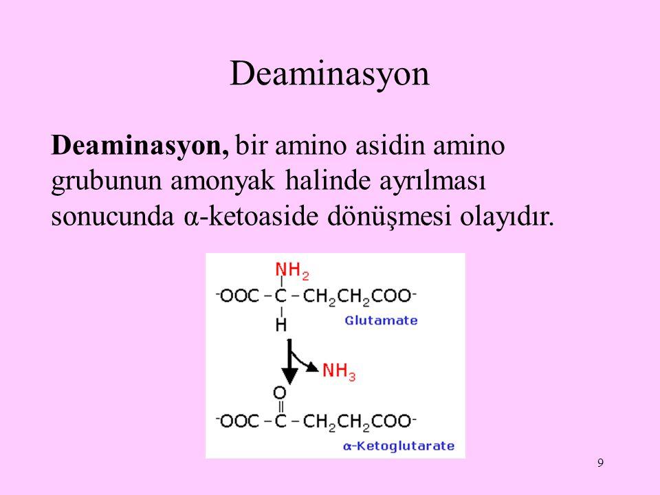Deaminasyon Deaminasyon, bir amino asidin amino grubunun amonyak halinde ayrılması sonucunda α-ketoaside dönüşmesi olayıdır.