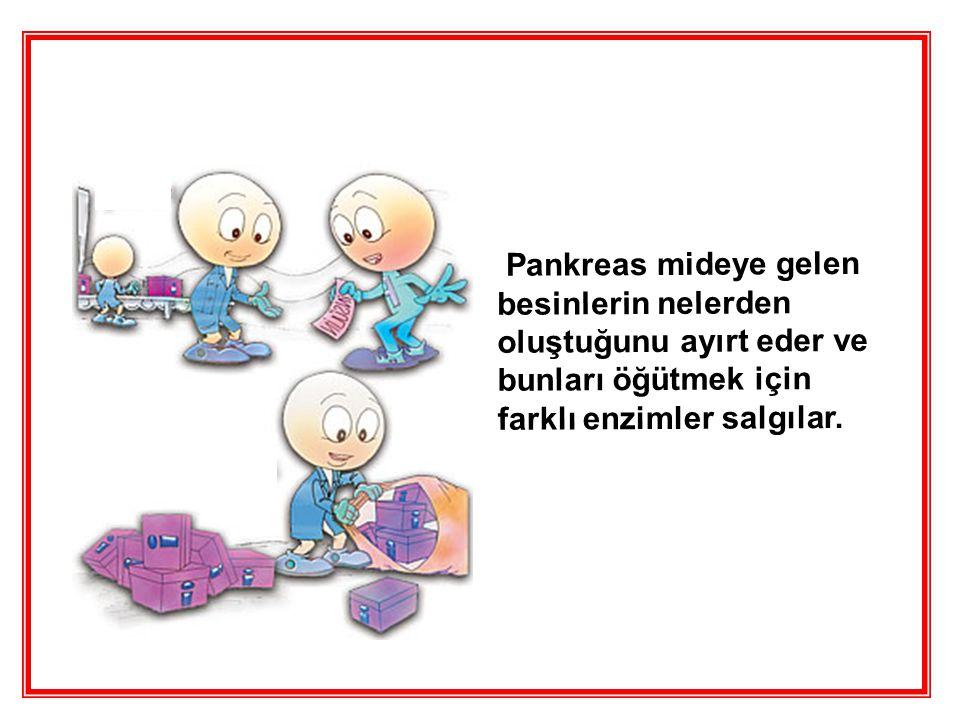 Pankreas mideye gelen besinlerin nelerden oluştuğunu ayırt eder ve bunları öğütmek için farklı enzimler salgılar.