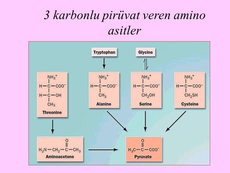 3 karbonlu pirüvat veren amino asitler