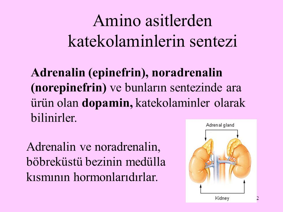 Amino asitlerden katekolaminlerin sentezi