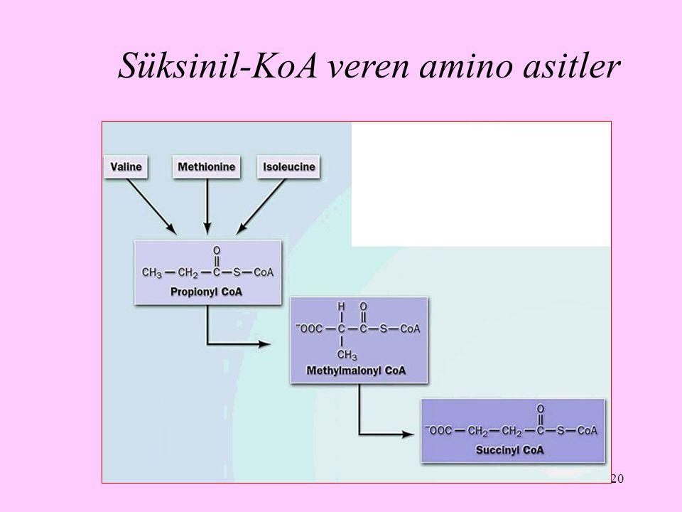 Süksinil-KoA veren amino asitler