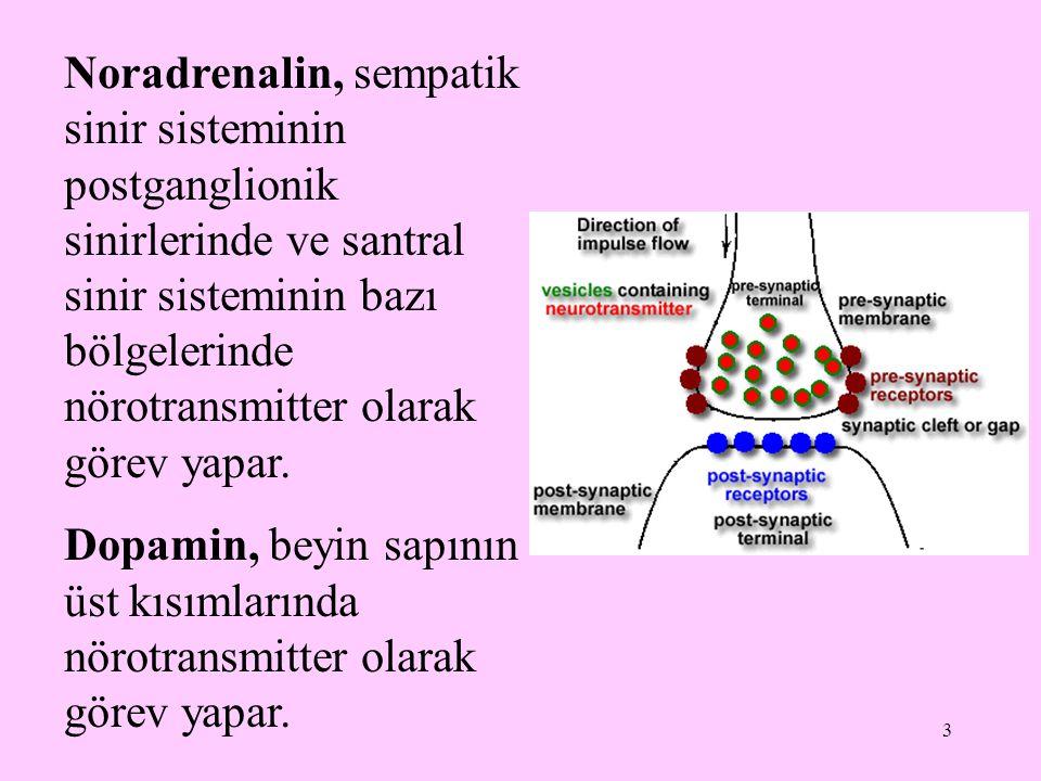 Noradrenalin, sempatik sinir sisteminin postganglionik sinirlerinde ve santral sinir sisteminin bazı bölgelerinde nörotransmitter olarak görev yapar.