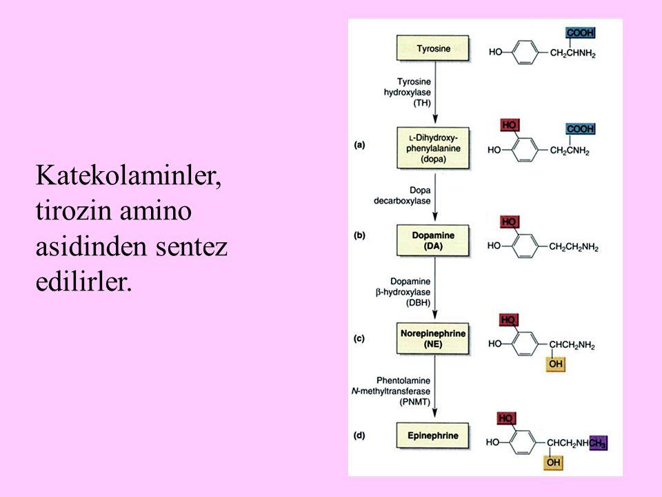 Katekolaminler, tirozin amino asidinden sentez edilirler.