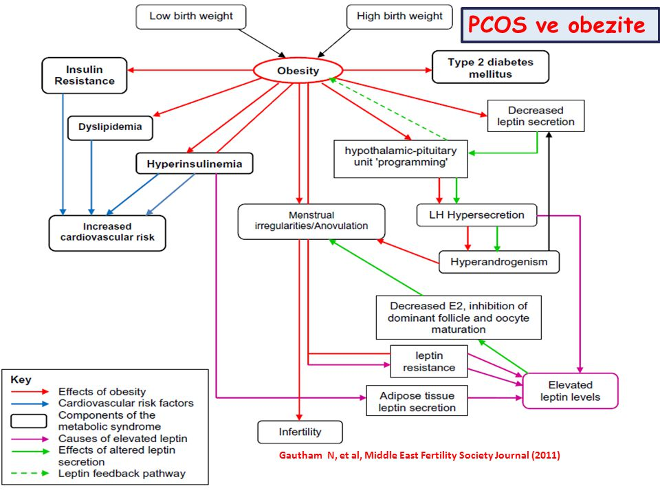 PCOS ve obezite Gautham N, et al, Middle East Fertility Society Journal (2011)