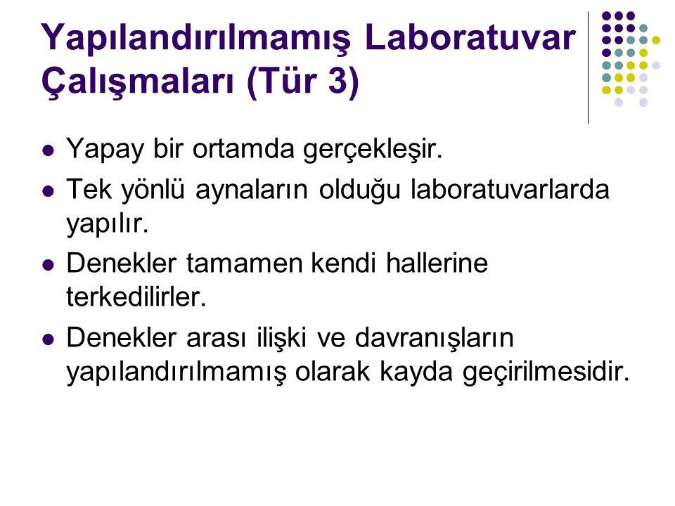 Yapılandırılmamış Laboratuvar Çalışmaları (Tür 3)