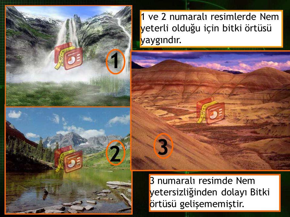 1 ve 2 numaralı resimlerde Nem yeterli olduğu için bitki örtüsü yaygındır.