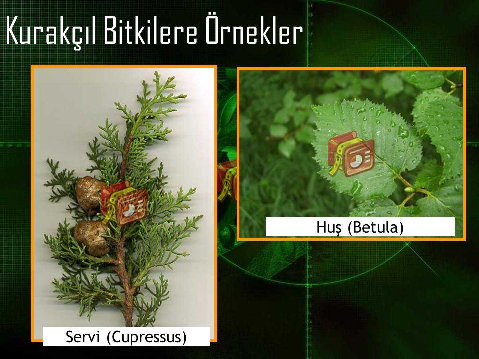 Kurakçıl Bitkilere Örnekler