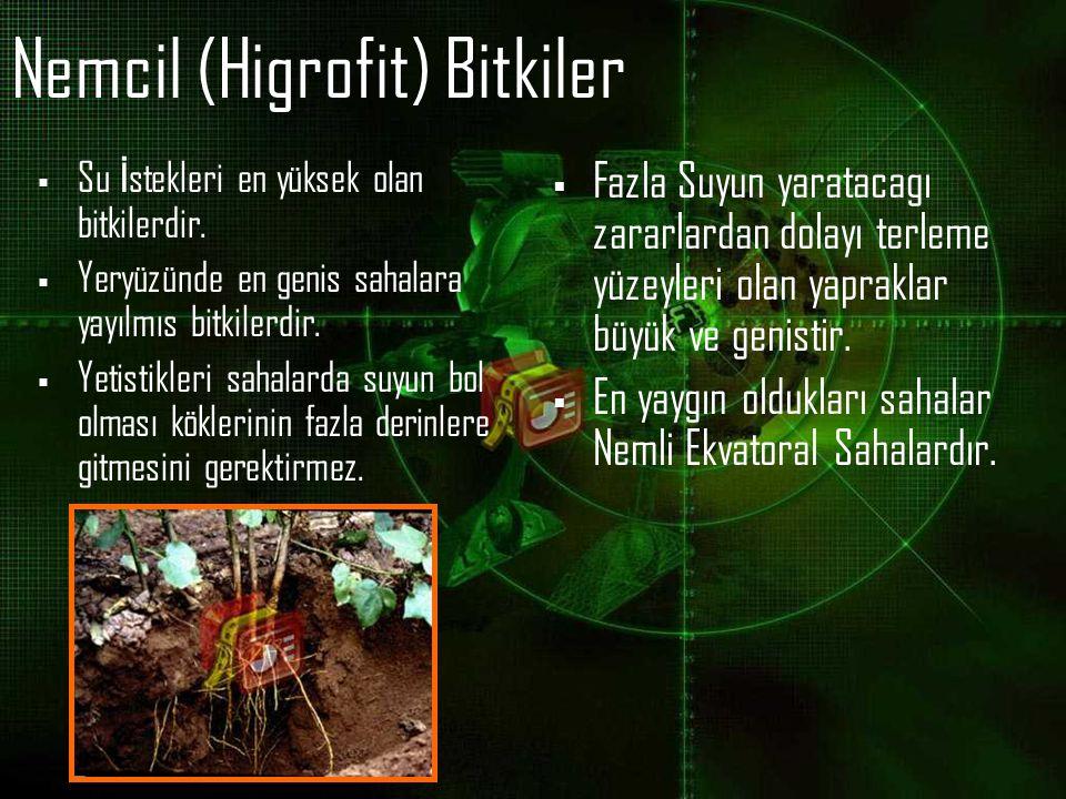 Nemcil (Higrofit) Bitkiler