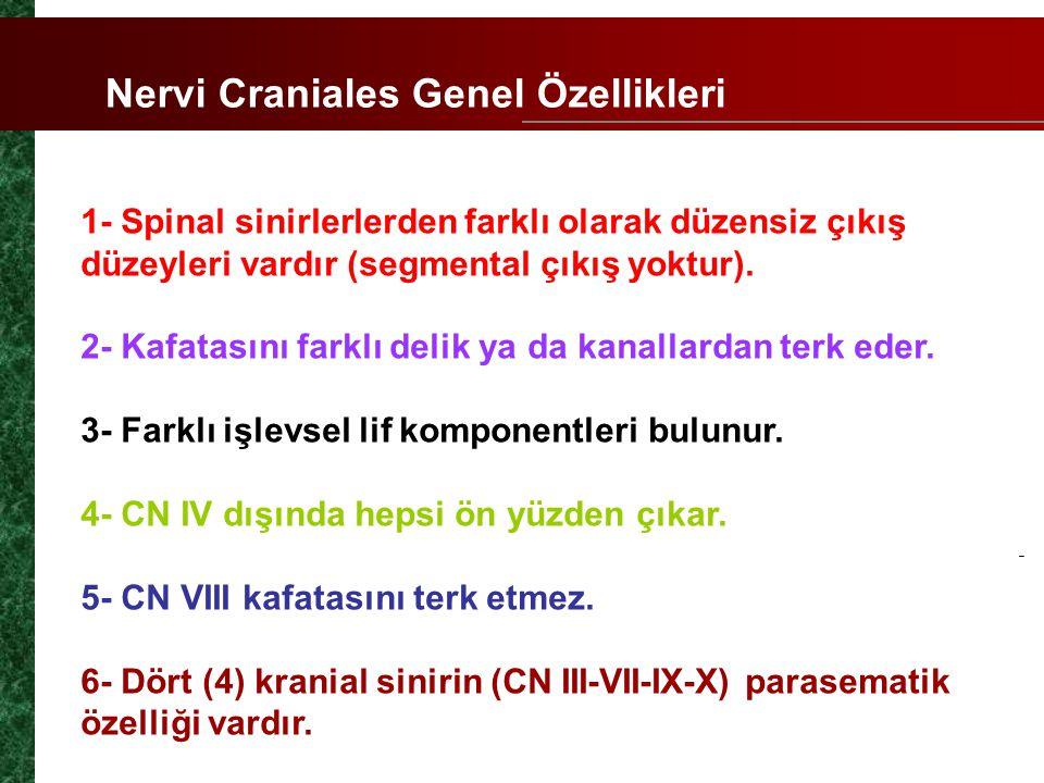Nervi Craniales Genel Özellikleri