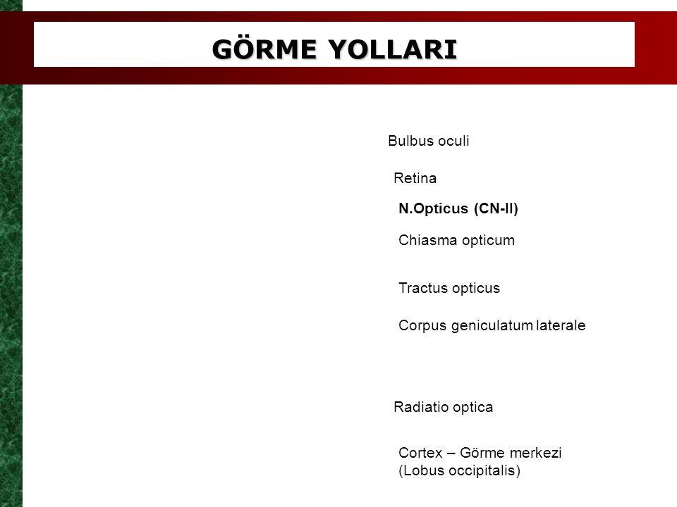 GÖRME YOLLARI Bulbus oculi Retina N.Opticus (CN-II) Chiasma opticum