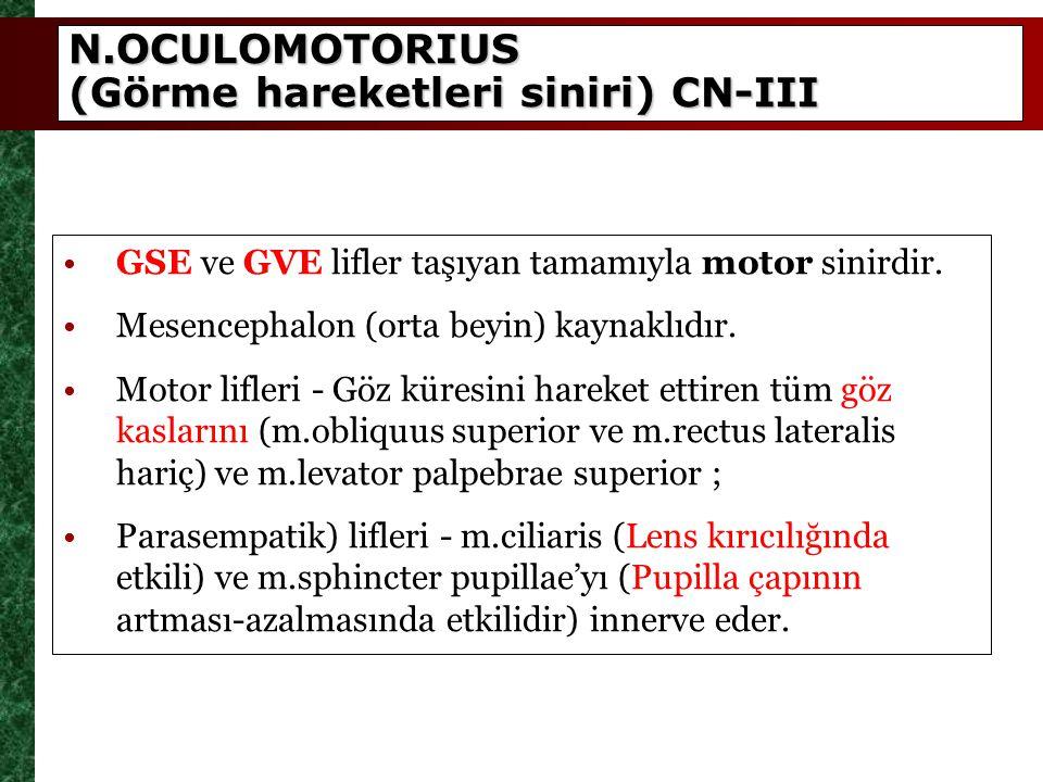 N.OCULOMOTORIUS (Görme hareketleri siniri) CN-III