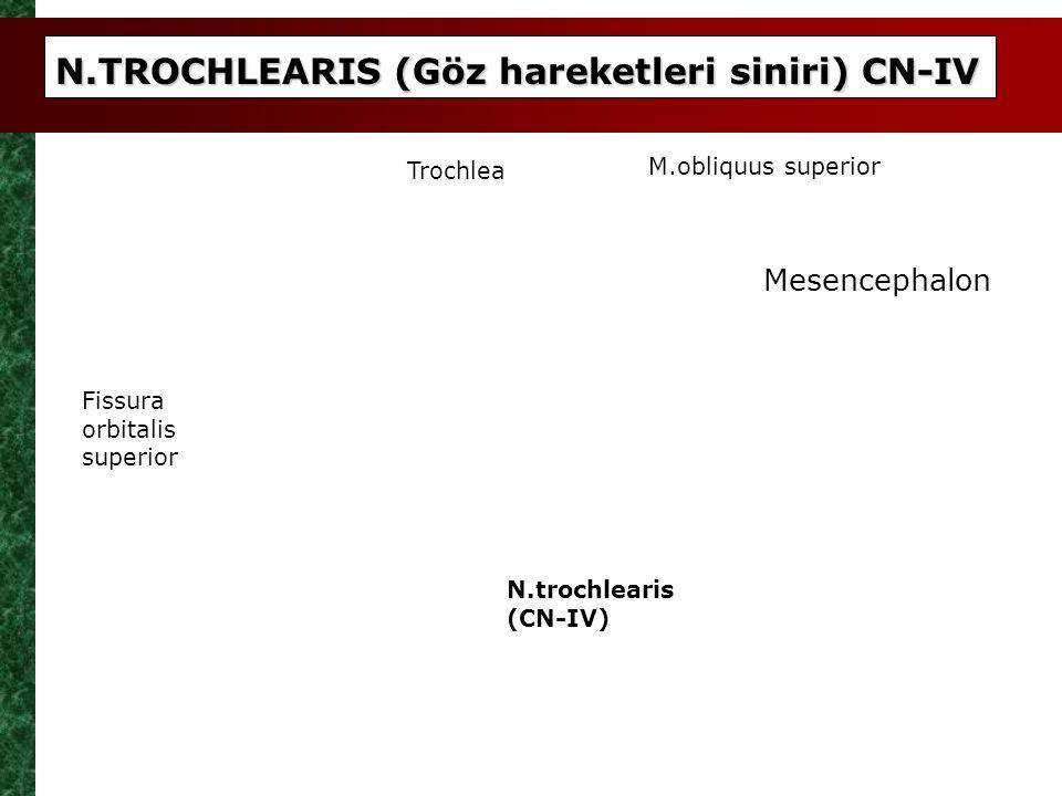 N.TROCHLEARIS (Göz hareketleri siniri) CN-IV