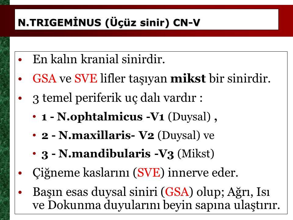 N.TRIGEMİNUS (Üçüz sinir) CN-V