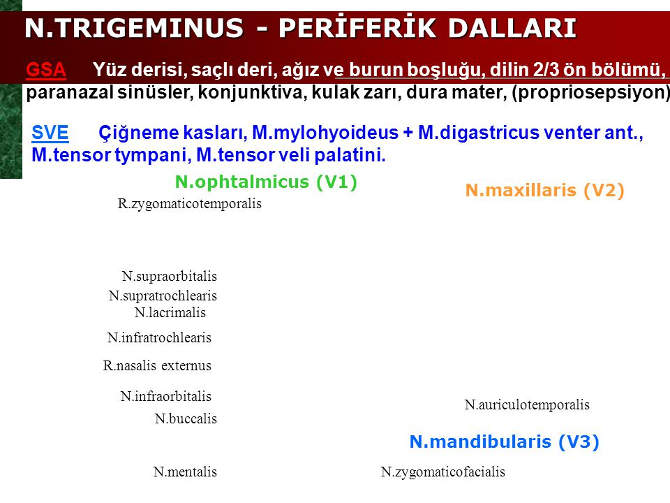 N.TRIGEMINUS - PERİFERİK DALLARI