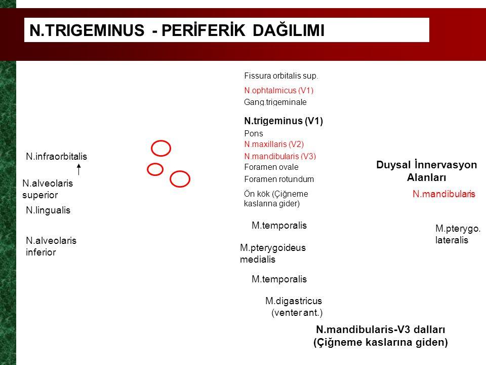 N.TRIGEMINUS - PERİFERİK DAĞILIMI