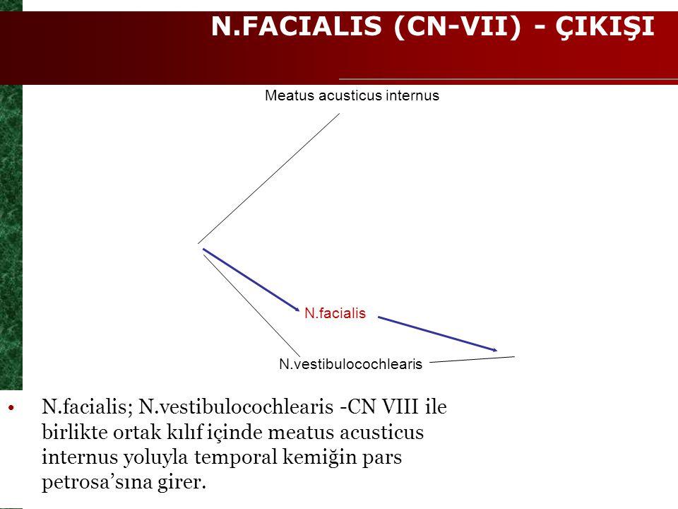 N.FACIALIS (CN-VII) - ÇIKIŞI