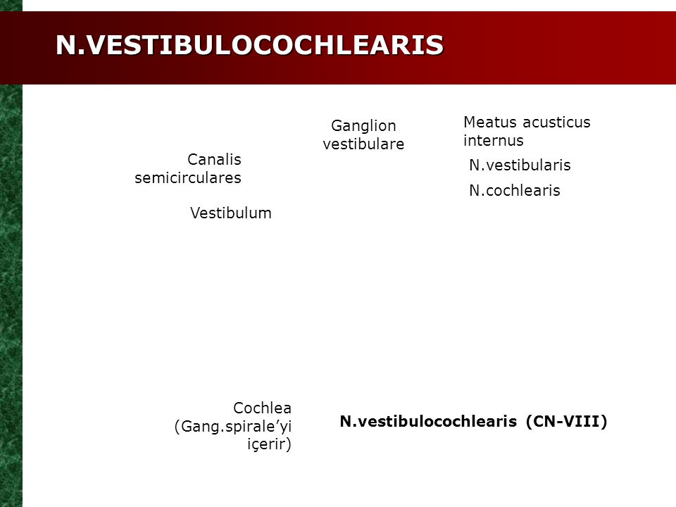 N.VESTIBULOCOCHLEARIS