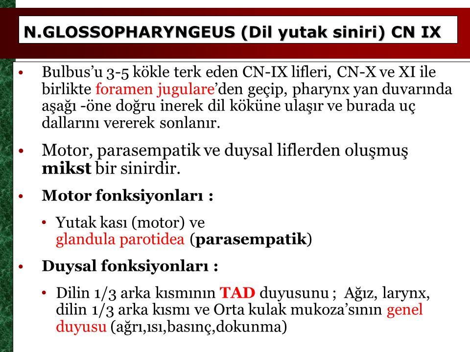 N.GLOSSOPHARYNGEUS (Dil yutak siniri) CN IX